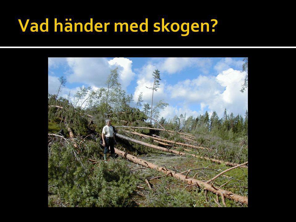 Vad händer med skogen