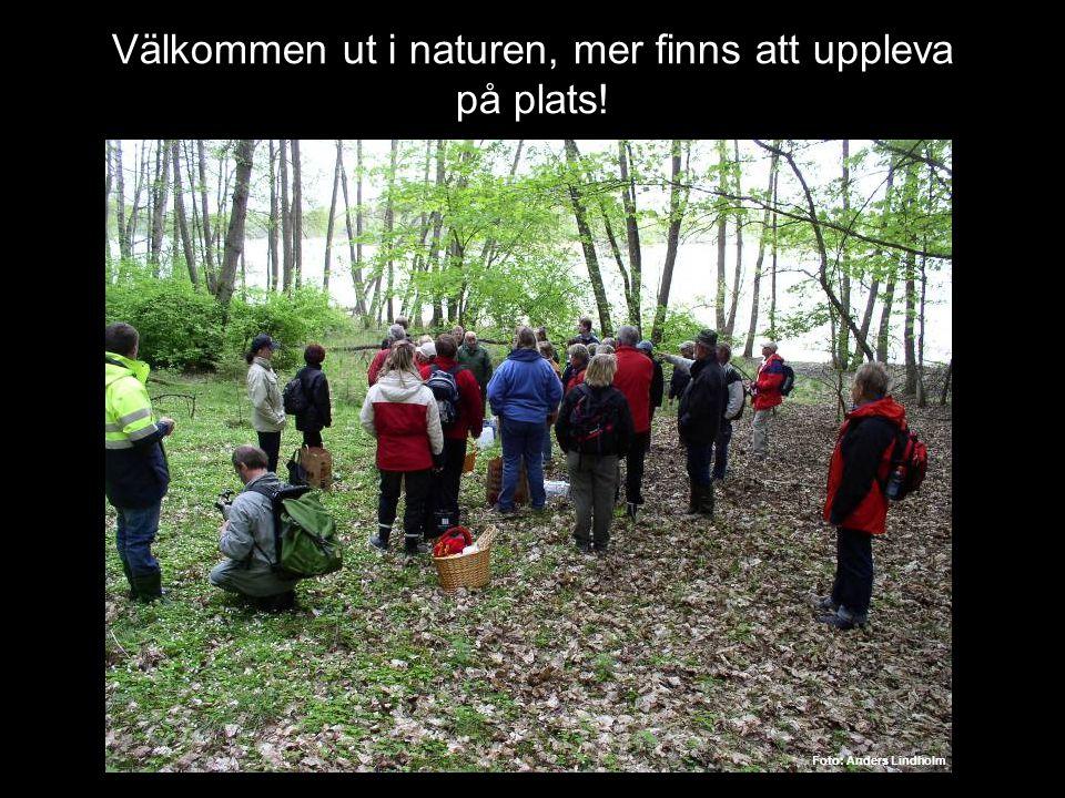 Välkommen ut i naturen, mer finns att uppleva på plats!