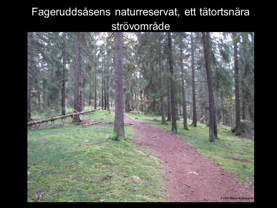 Fageruddsåsens naturreservat, ett tätortsnära strövområde