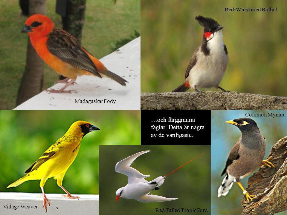 …och färggranna fåglar. Detta är några av de vanligaste.
