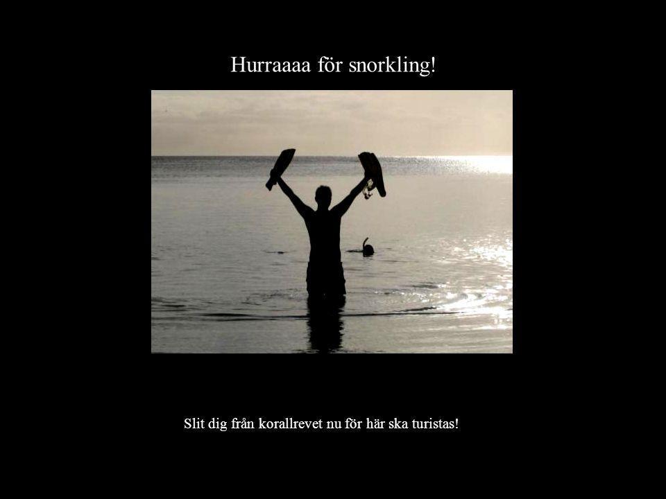Hurraaaa för snorkling!