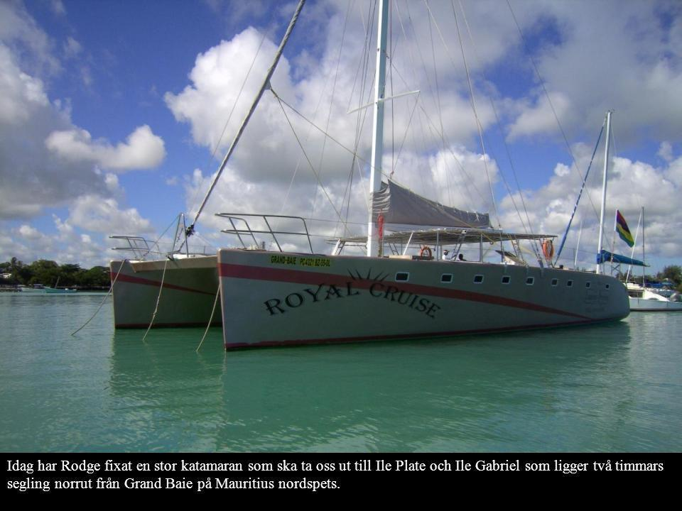 Idag har Rodge fixat en stor katamaran som ska ta oss ut till Ile Plate och Ile Gabriel som ligger två timmars segling norrut från Grand Baie på Mauritius nordspets.