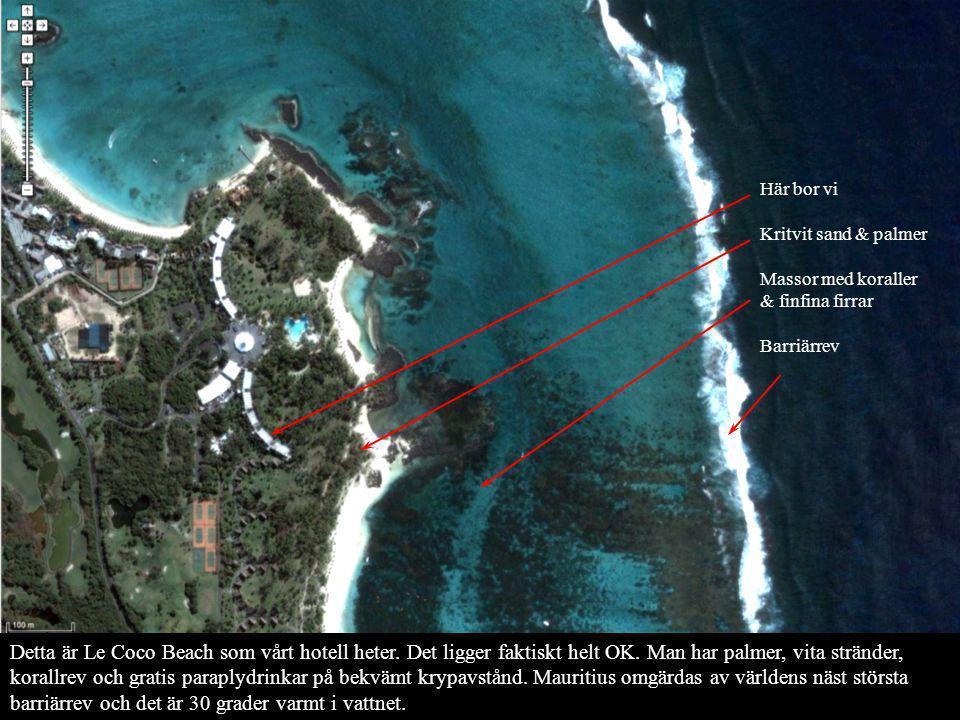 Här bor vi Kritvit sand & palmer. Massor med koraller & finfina firrar. Barriärrev.