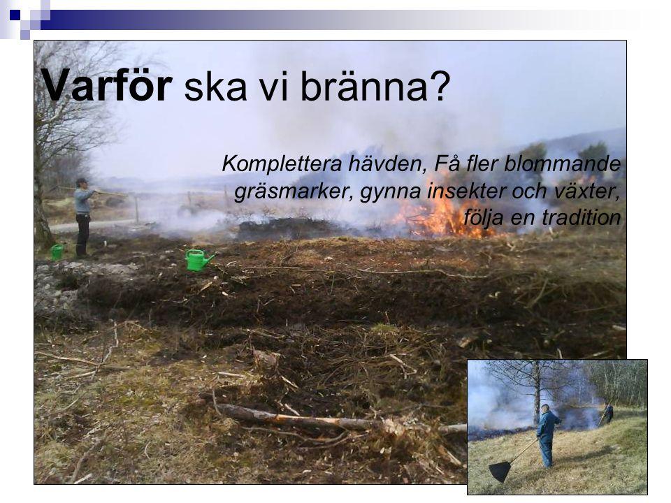 Varför ska vi bränna Komplettera hävden, Få fler blommande gräsmarker, gynna insekter och växter, följa en tradition.