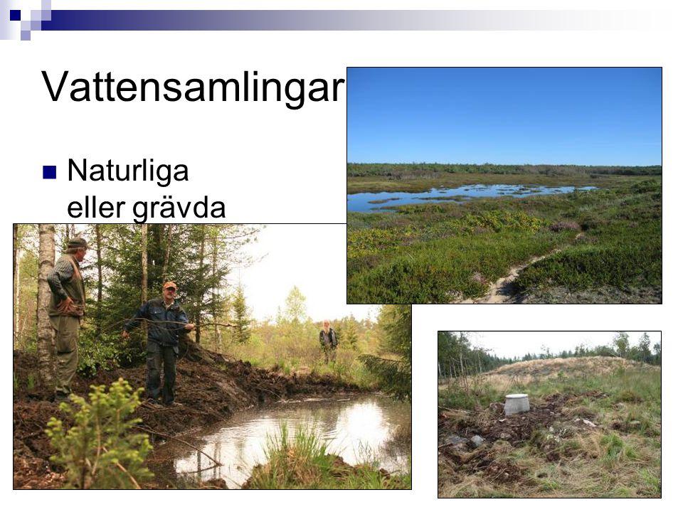 Vattensamlingar Naturliga eller grävda