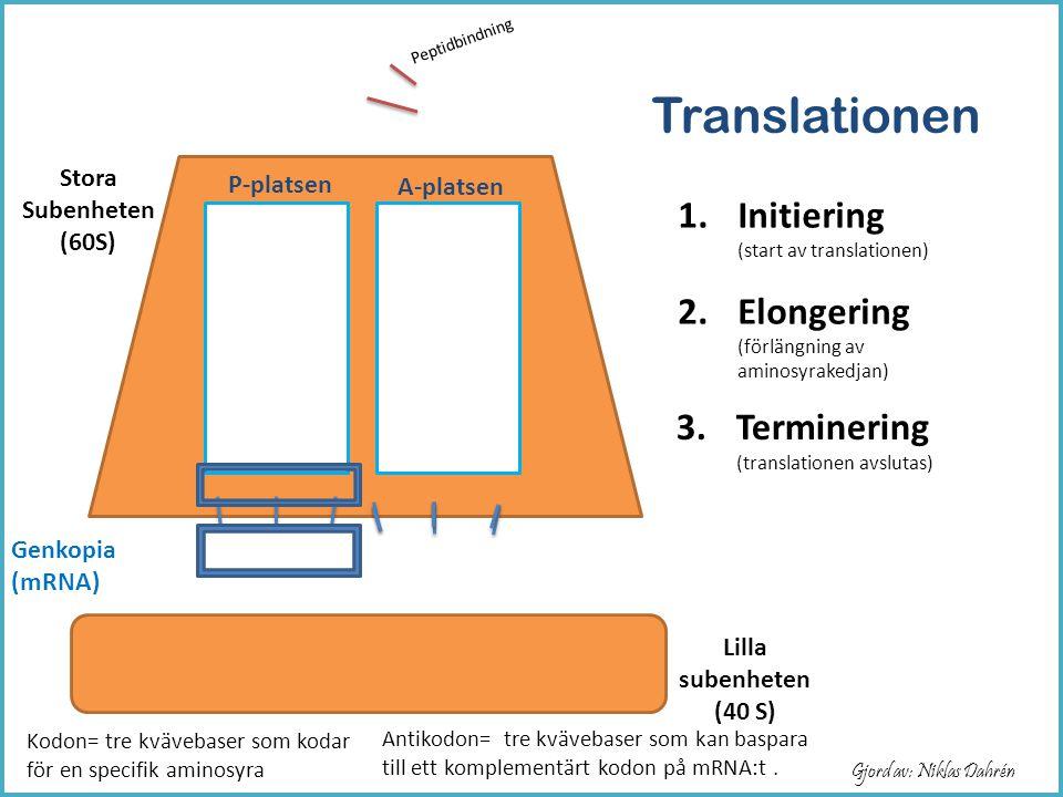 Translationen Initiering (start av translationen)