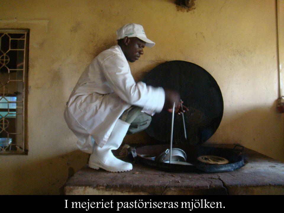 I mejeriet pastöriseras mjölken.
