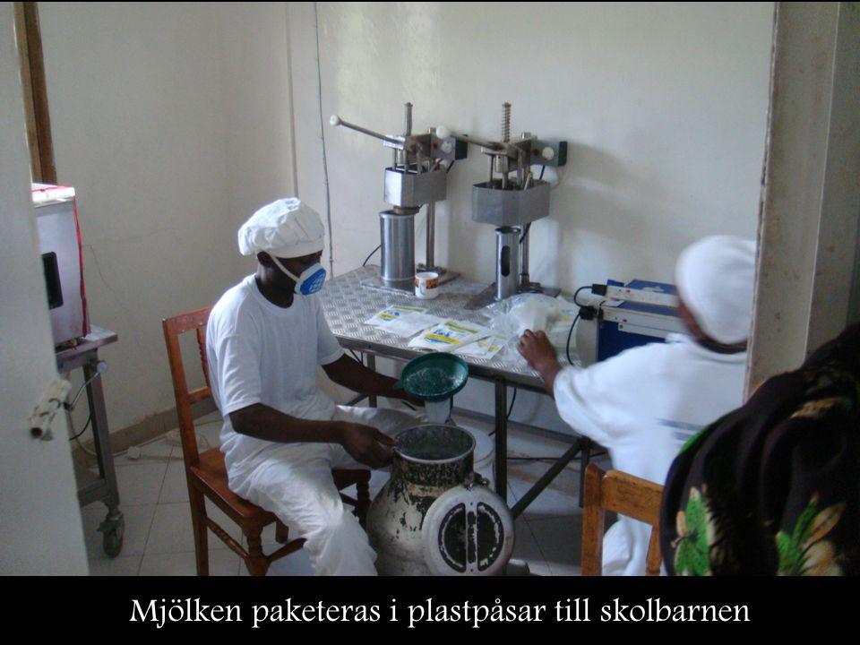 Mjölken paketeras i plastpåsar till skolbarnen