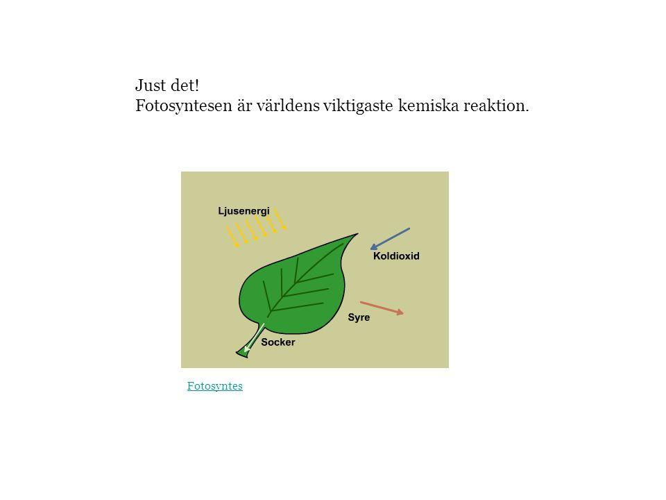 Fotosyntesen är världens viktigaste kemiska reaktion.