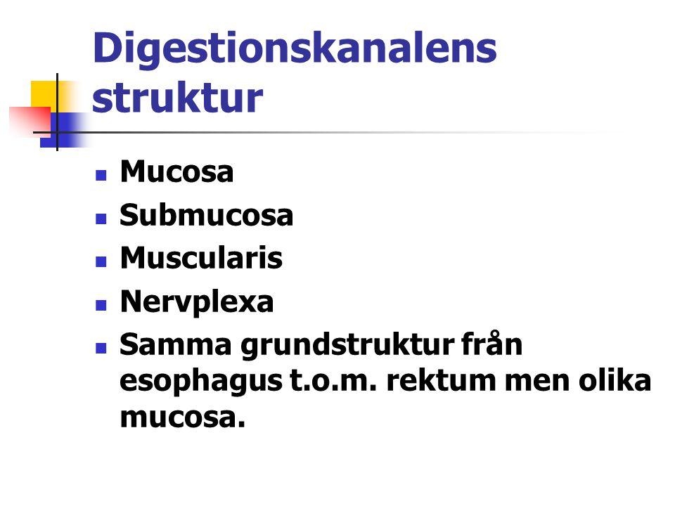 Digestionskanalens struktur