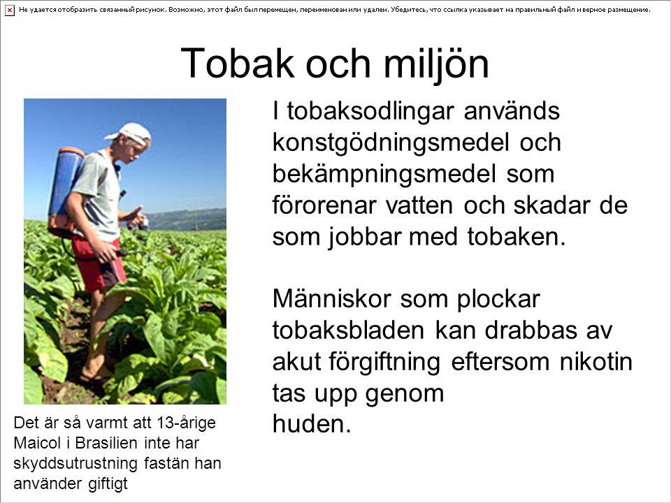Tobak och miljön I tobaksodlingar används