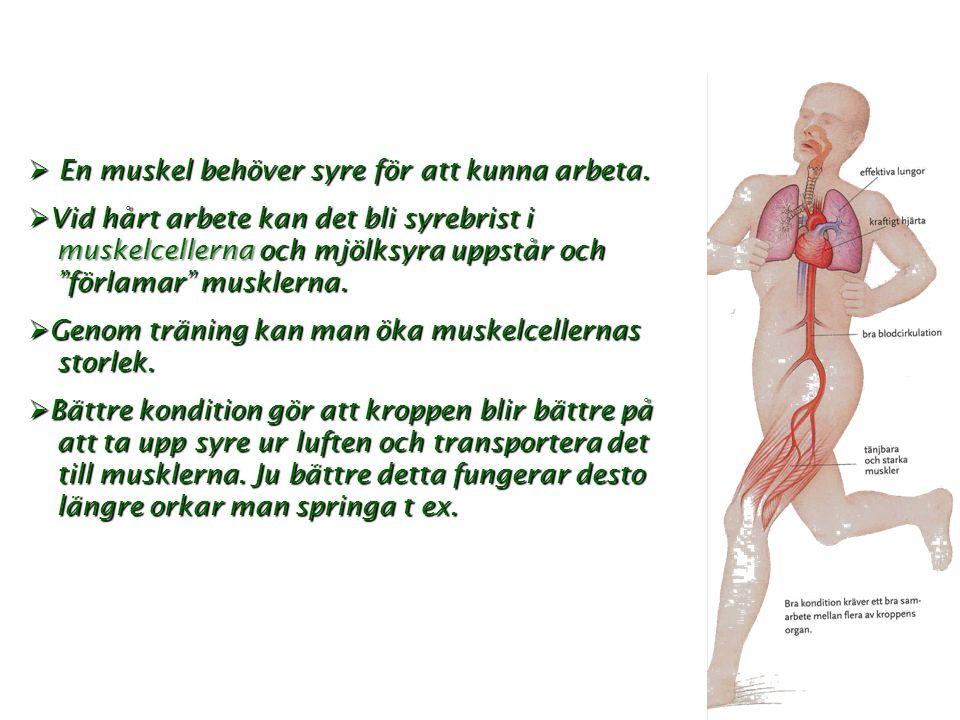 En muskel behöver syre för att kunna arbeta.