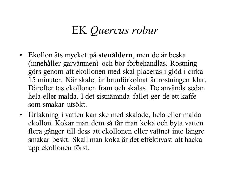 EK Quercus robur
