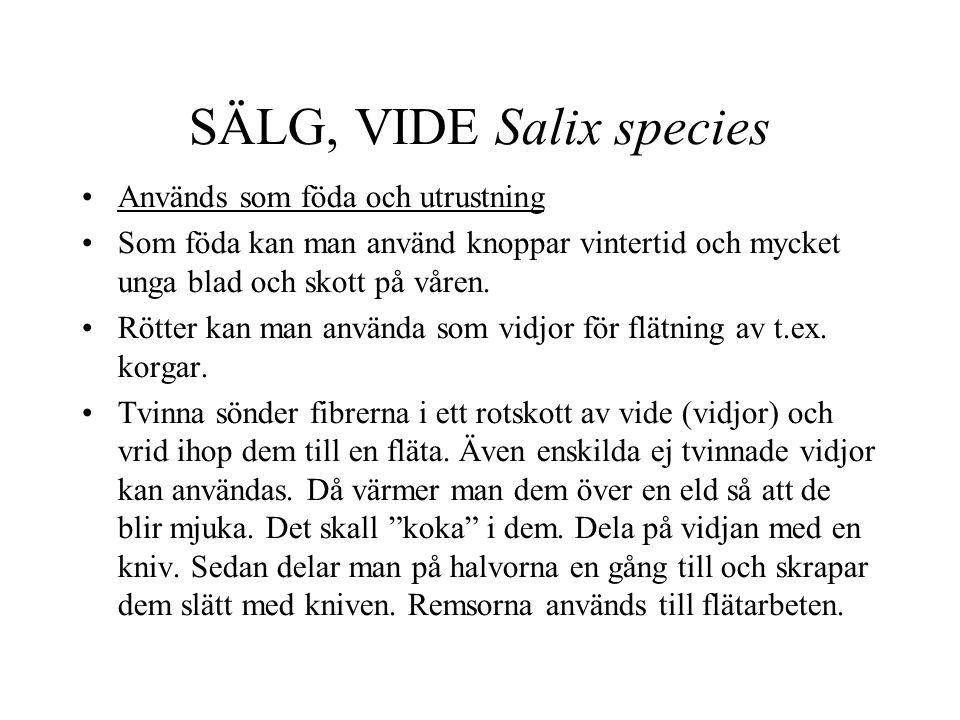SÄLG, VIDE Salix species