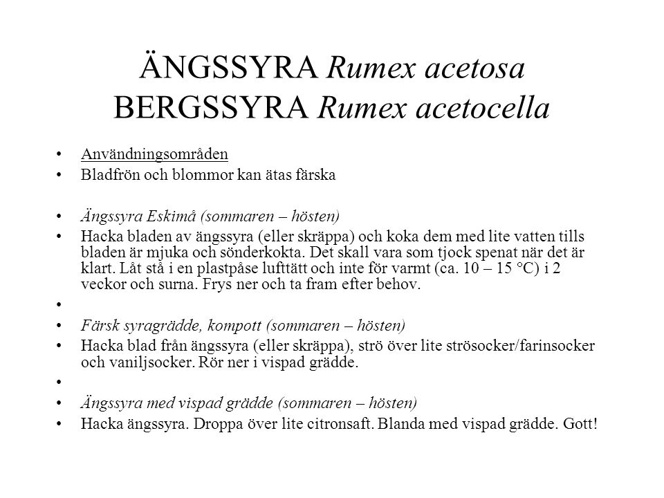ÄNGSSYRA Rumex acetosa BERGSSYRA Rumex acetocella