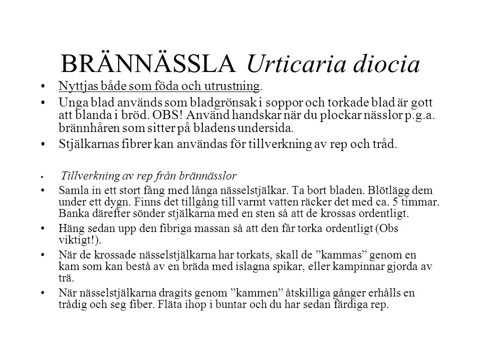BRÄNNÄSSLA Urticaria diocia