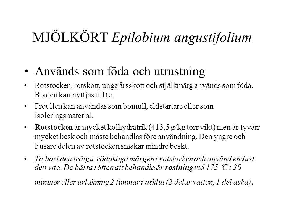 MJÖLKÖRT Epilobium angustifolium