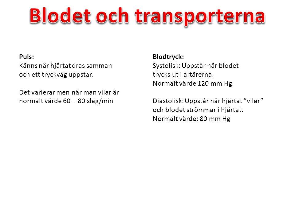 Blodet och transporterna