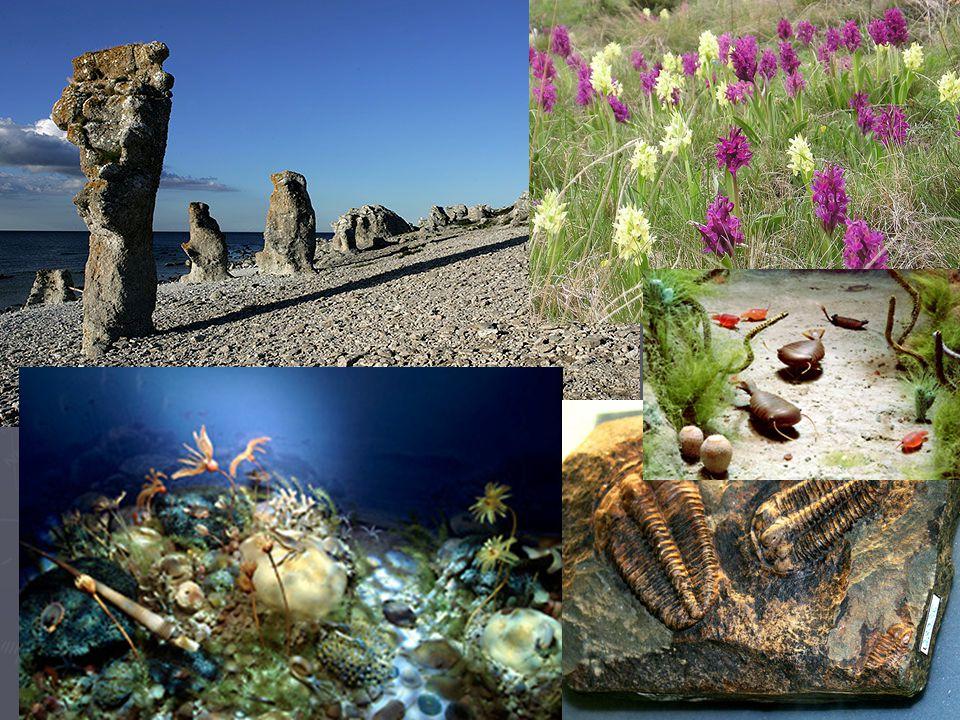 Bilderna nere t h och t v visar hur livet kan ha tett sig i havet för 400-500 miljoner år sedan.