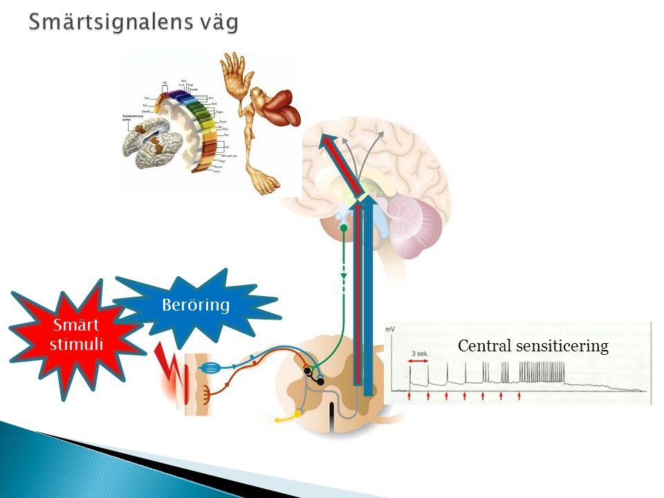 Smärtsignalens väg Beröring Smärt stimuli Central sensiticering 45 26