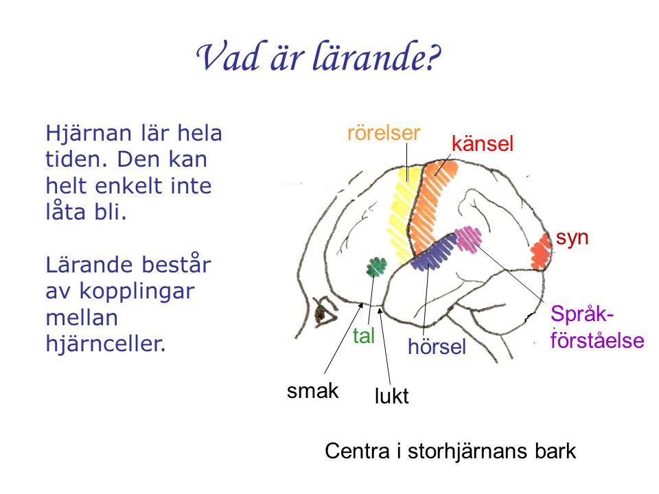 Centra i storhjärnans bark