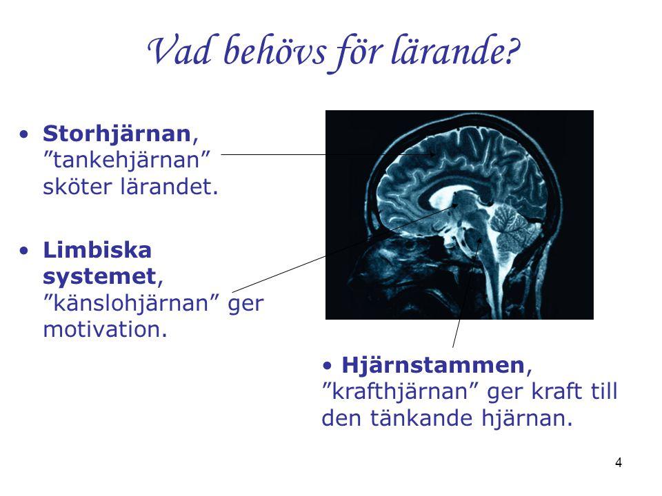 Vad behövs för lärande Storhjärnan, tankehjärnan sköter lärandet.