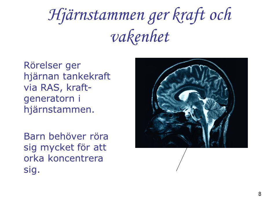 Hjärnstammen ger kraft och vakenhet