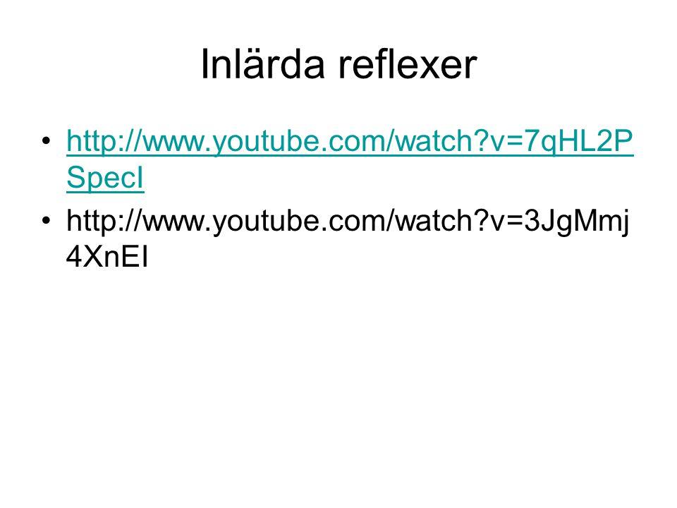 Inlärda reflexer http://www.youtube.com/watch v=7qHL2PSpecI