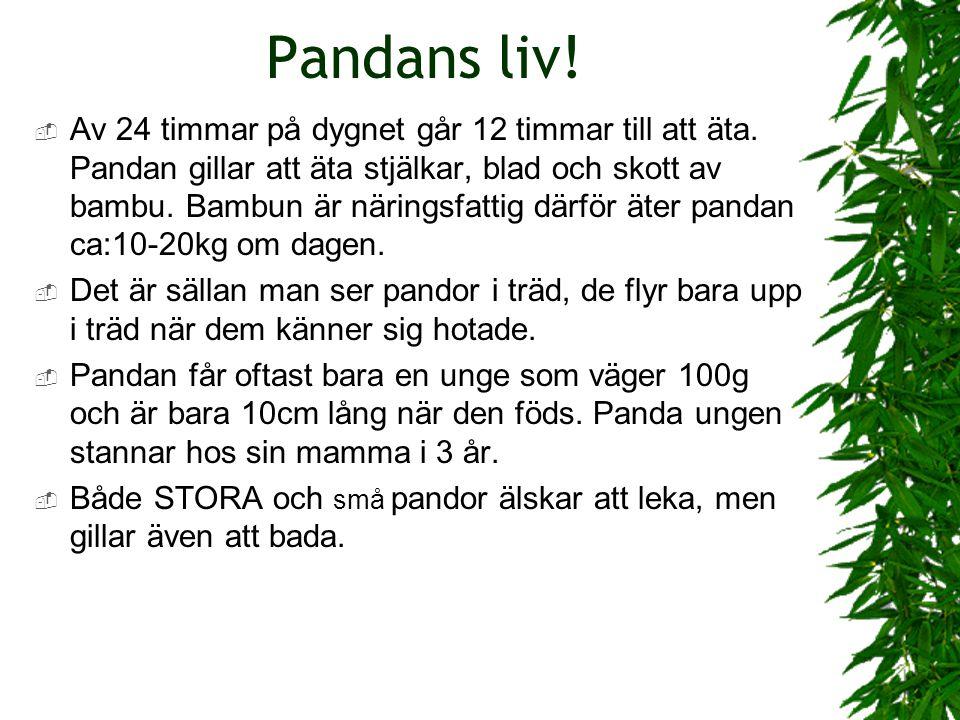 Pandans liv!