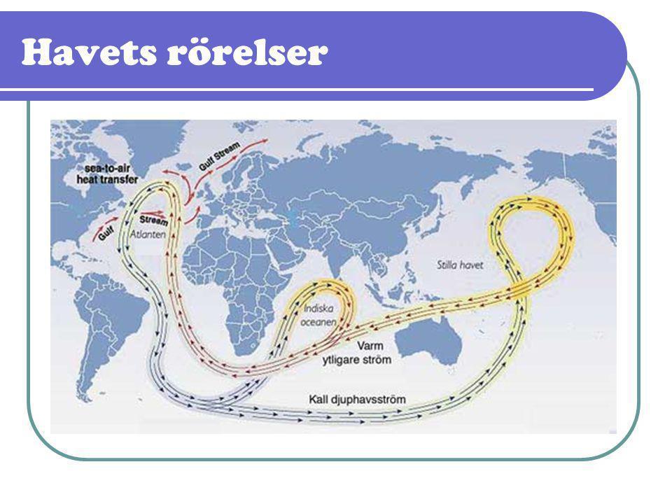 Havets rörelser