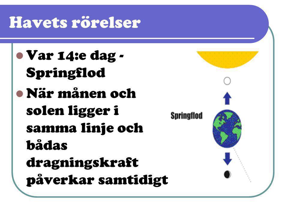 Havets rörelser Var 14:e dag - Springflod