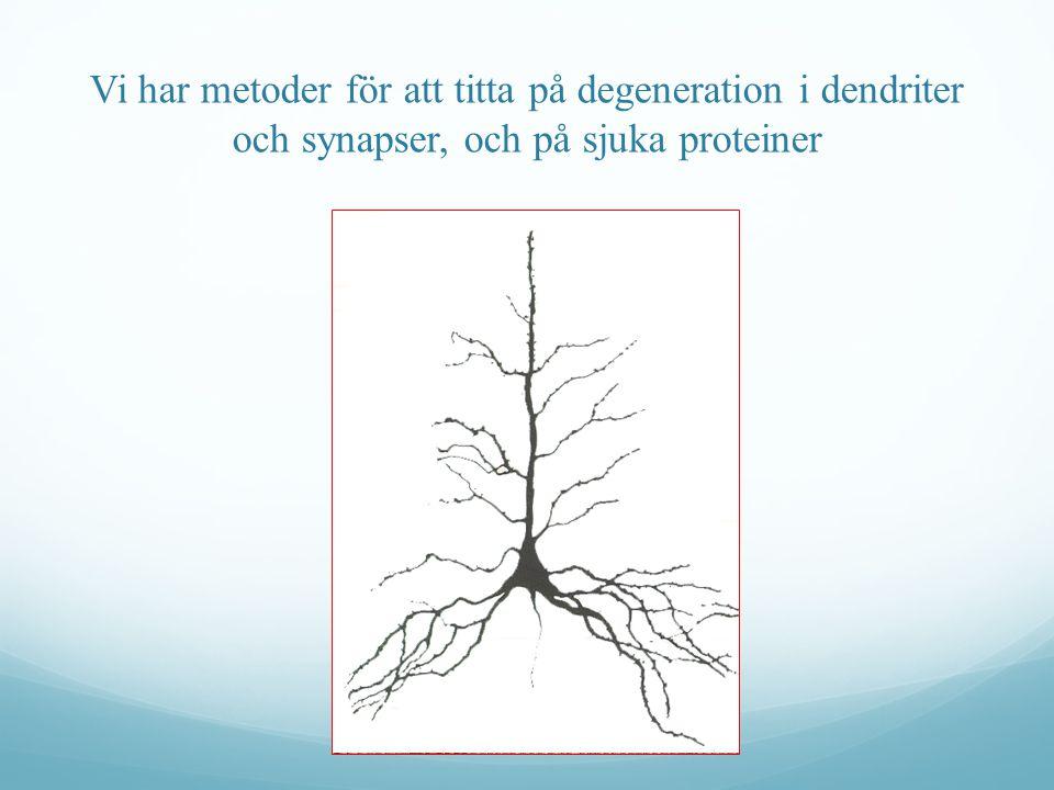 Vi har metoder för att titta på degeneration i dendriter och synapser, och på sjuka proteiner