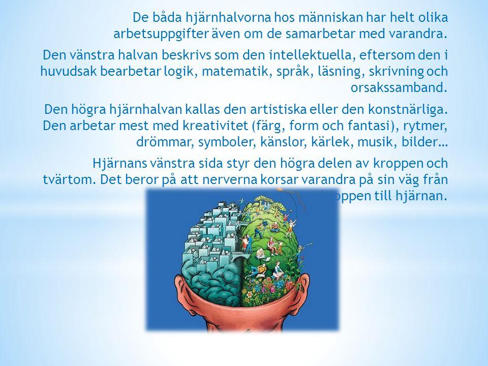 De båda hjärnhalvorna hos människan har helt olika arbetsuppgifter även om de samarbetar med varandra.