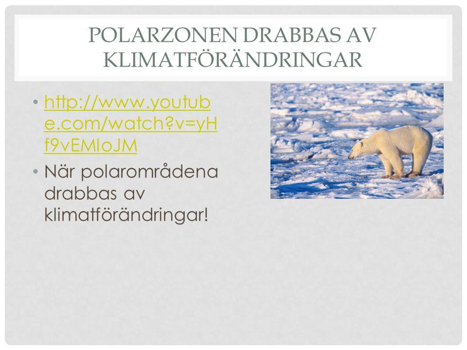 Polarzonen drabbas av klimatförändringar