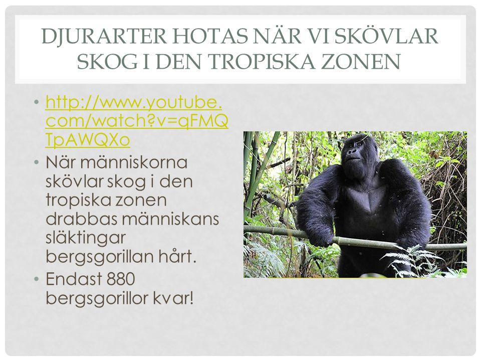 Djurarter hotas när vi skövlar skog i den tropiska zonen