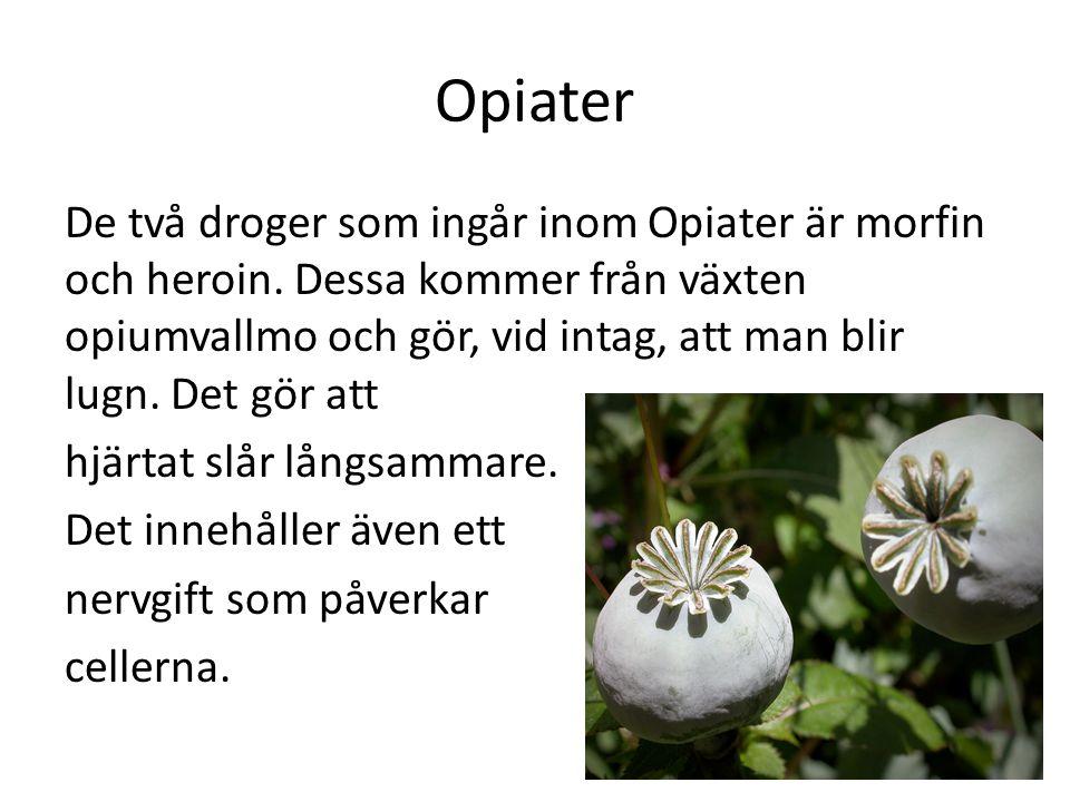 Opiater