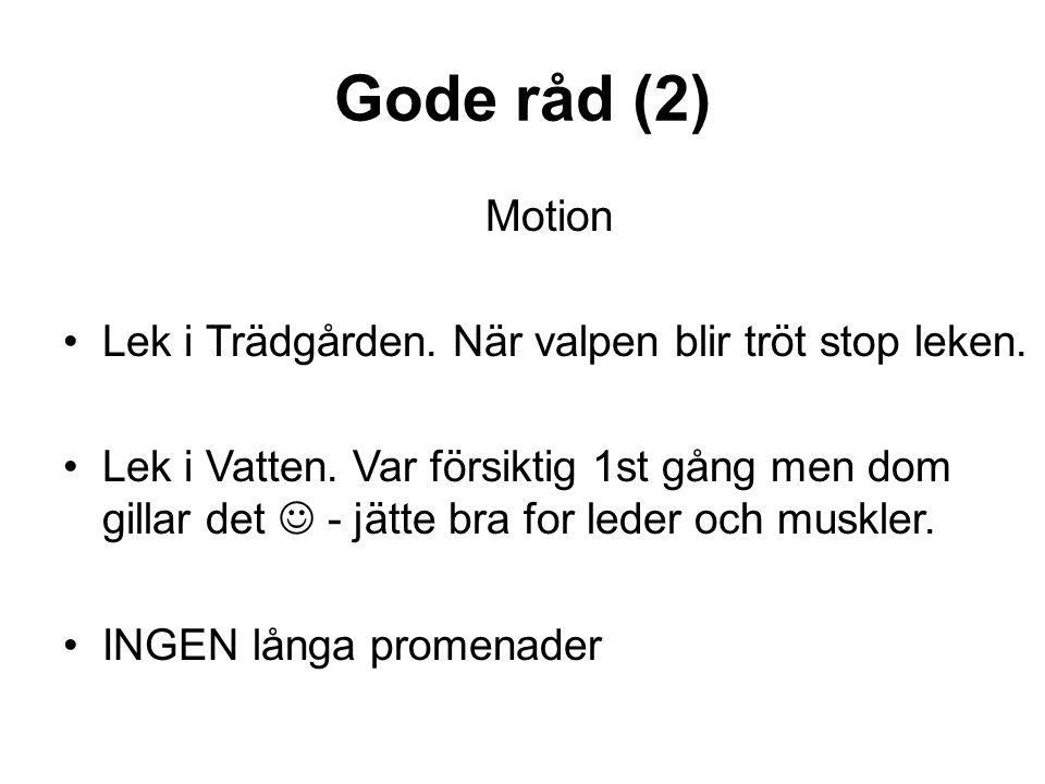 Gode råd (2) Motion Lek i Trädgården. När valpen blir tröt stop leken.
