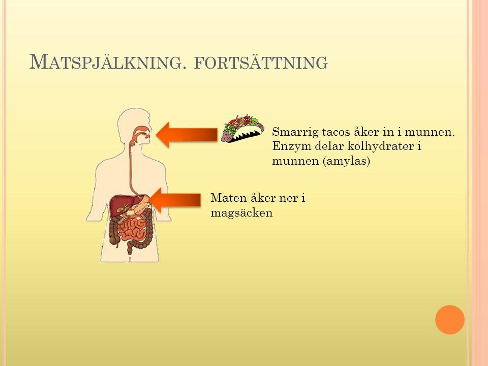 Matspjälkning. fortsättning