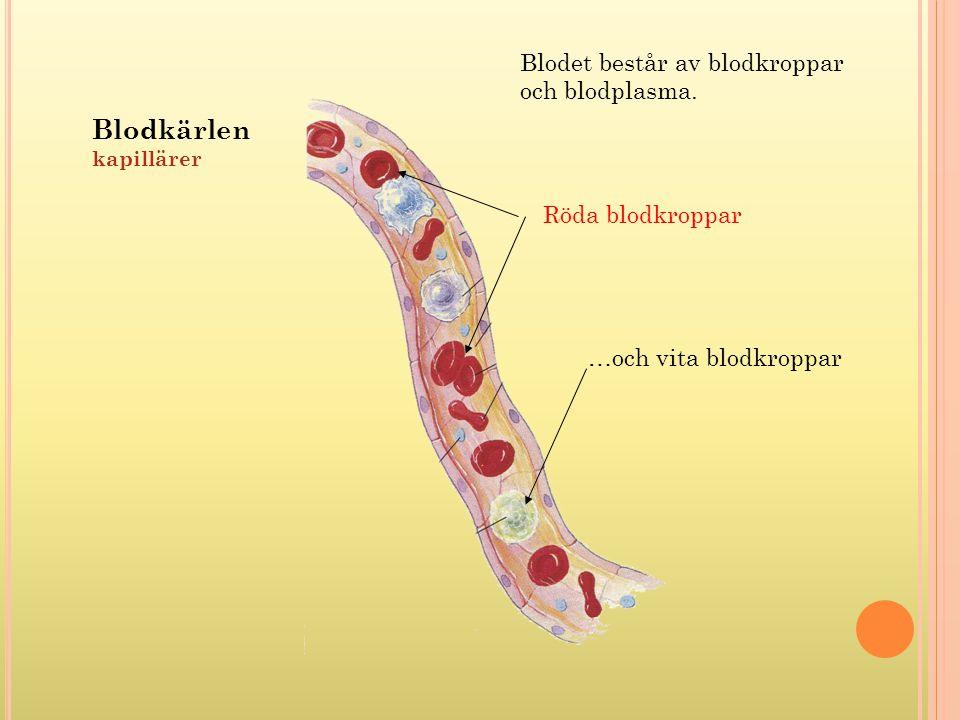 Blodkärlen Blodet består av blodkroppar och blodplasma.