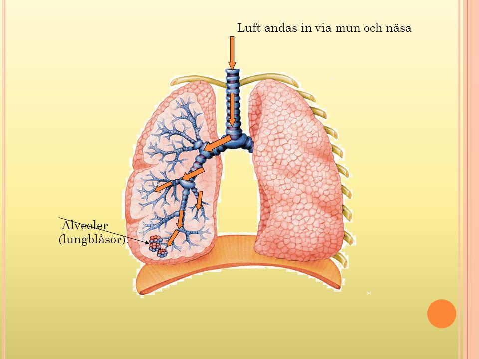Luft andas in via mun och näsa