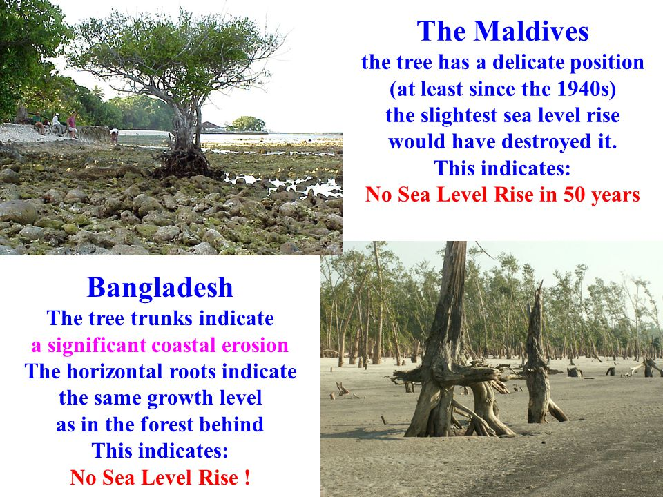 The Maldives the tree has a delicate position (at least since the 1940s) the slightest sea level rise would have destroyed it. This indicates: No Sea Level Rise in 50 years