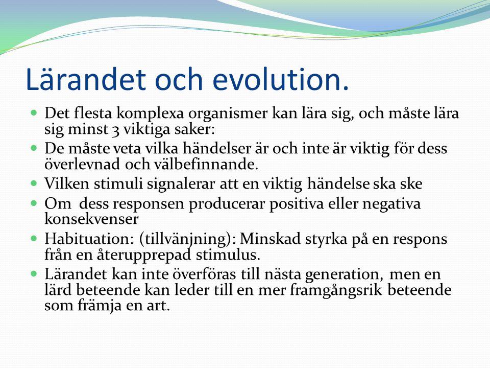 Lärandet och evolution.