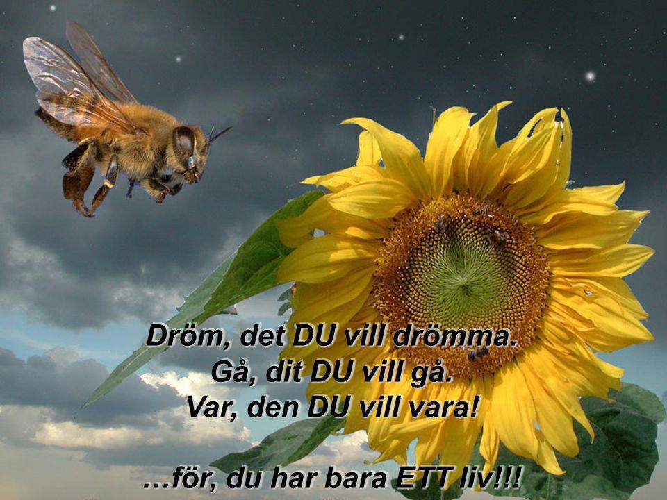Dröm, det DU vill drömma. Gå, dit DU vill gå. Var, den DU vill vara! …för, du har bara ETT liv!!!