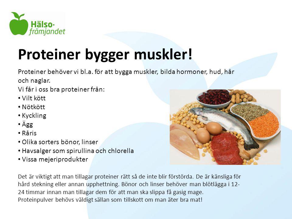 Proteiner bygger muskler!