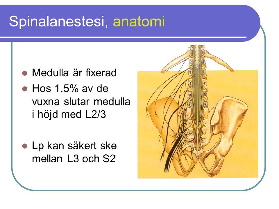 Spinalanestesi, anatomi