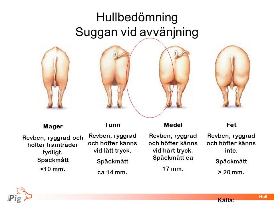 Hullbedömning Suggan vid avvänjning