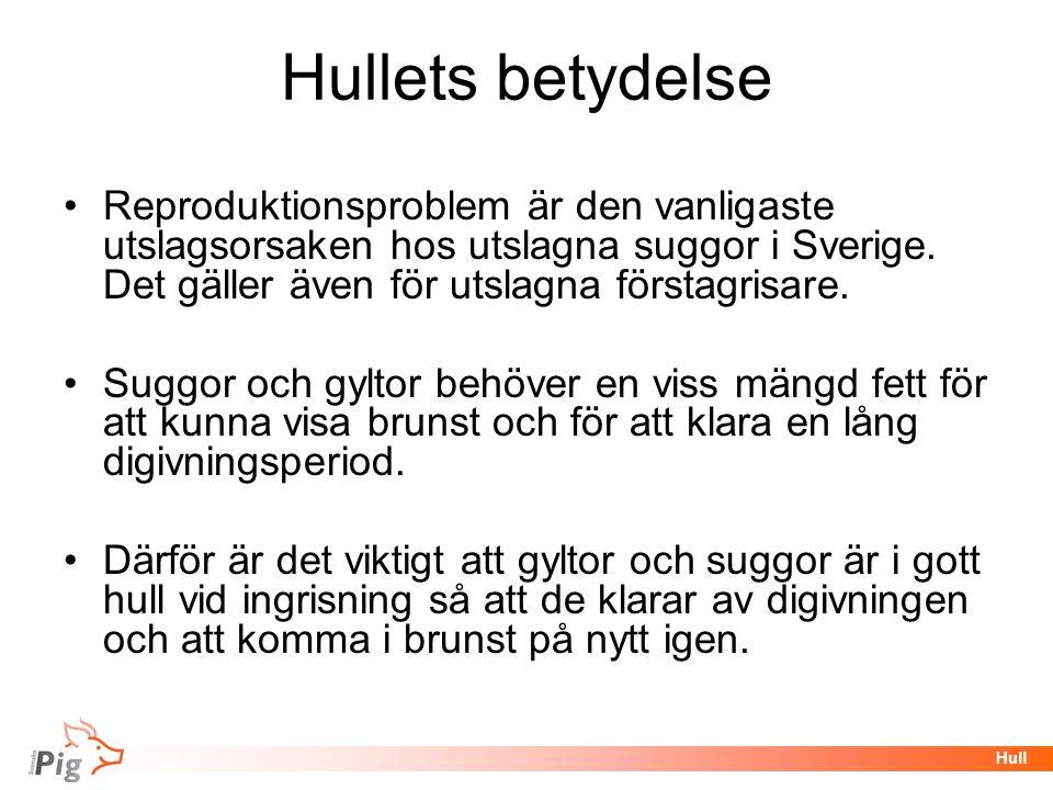 Hullets betydelse Reproduktionsproblem är den vanligaste utslagsorsaken hos utslagna suggor i Sverige. Det gäller även för utslagna förstagrisare.