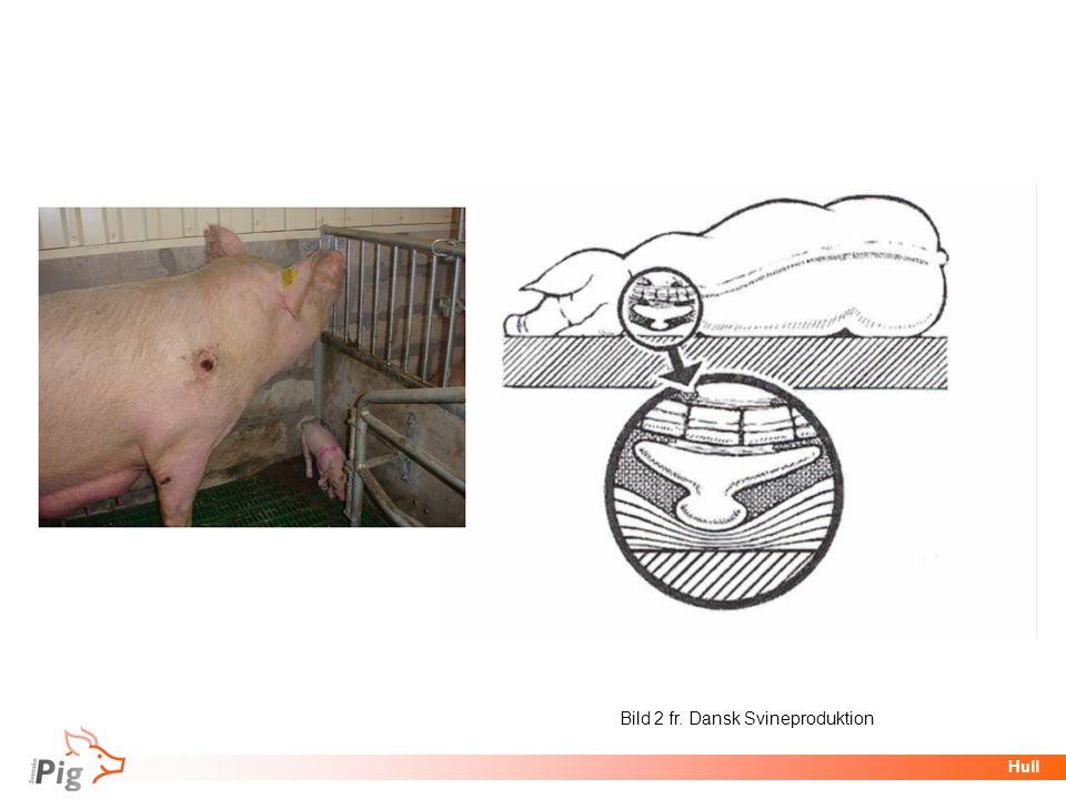 Bild 2 fr. Dansk Svineproduktion