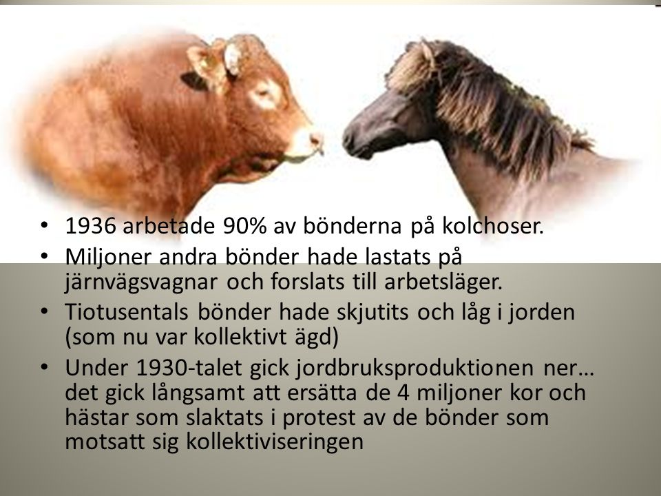 Kor och hästar slaktades i protest