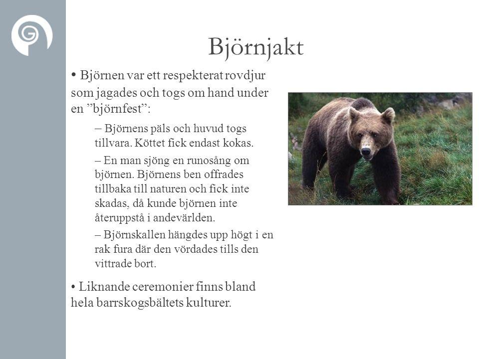Björnjakt Björnen var ett respekterat rovdjur som jagades och togs om hand under en björnfest :